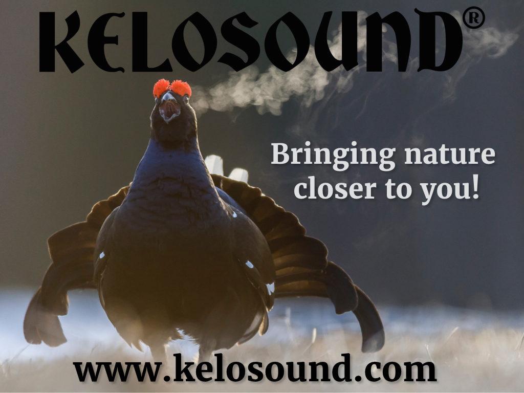 Kelosound-Bringing_nature.001